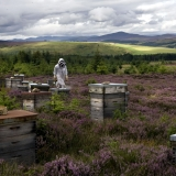 Gold Adopt a Hive